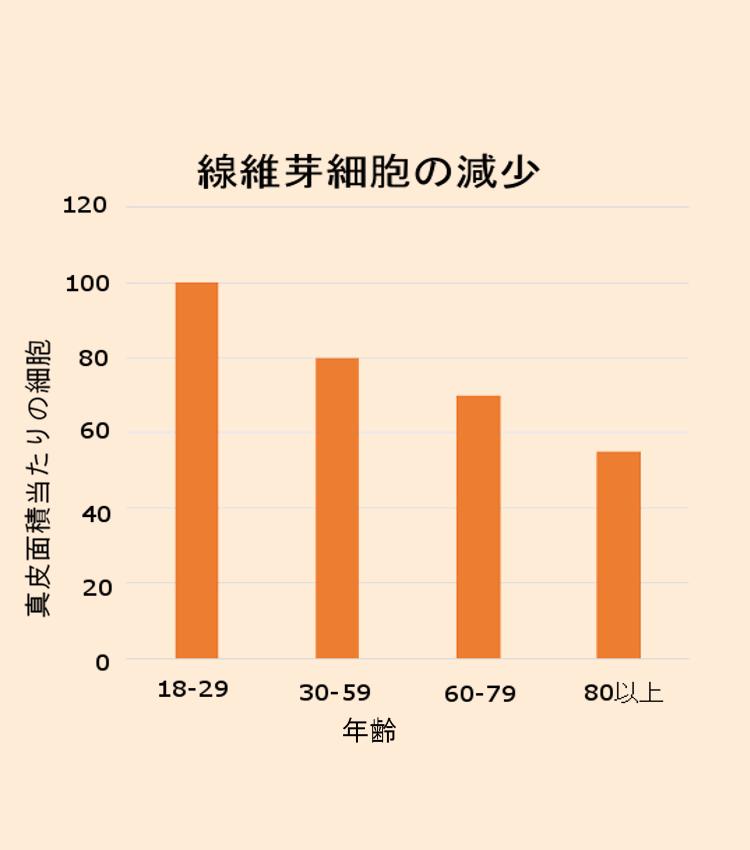 年齢とともに繊維芽細胞が減少
