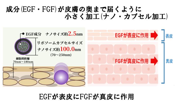 EGF,FGFがナノカプセル加工で皮膚の奥まで届く